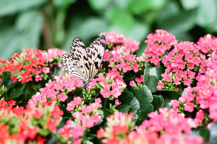 Victoria Butterfly Garden , Victoria BC,  Canada, Pacific Northwest,  Amy Nieto Photography